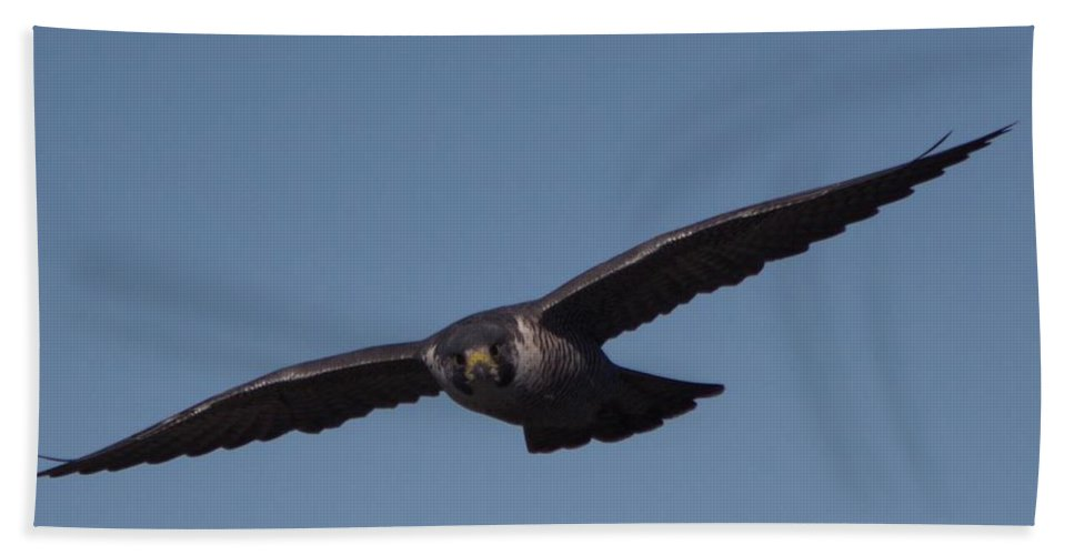 Peregrine Hand Towel featuring the photograph Peregrine 2 by Marta Robin Gaughen