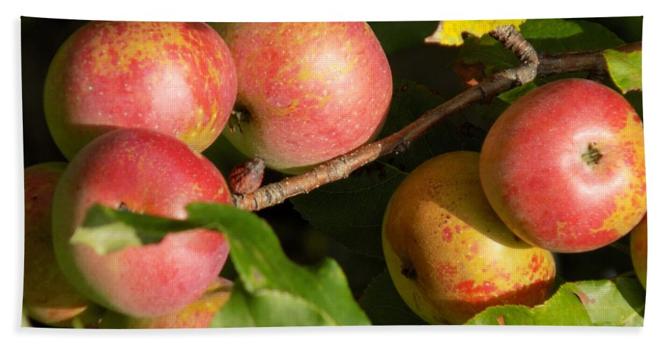 Apples Bath Sheet featuring the photograph Perfect Apples by William Tasker