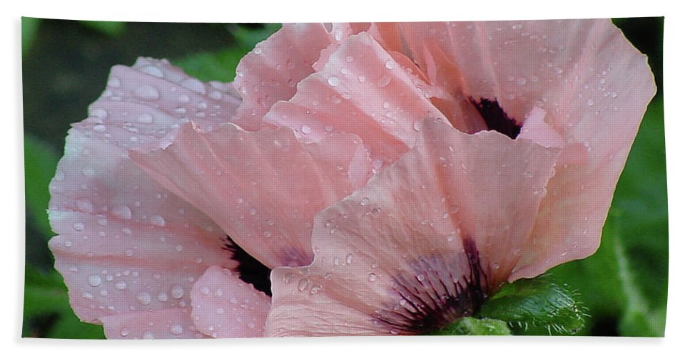 Flower Hand Towel featuring the photograph Perfect Peach Poppy by Shirley Heyn