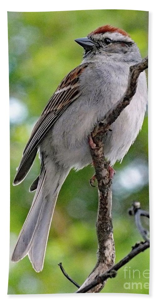 Chipping Sparrow Bath Sheet featuring the photograph Perfect Profile - Chipping Sparrow by Cindy Treger