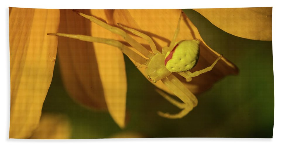 Black Eyed Susie Bath Sheet featuring the photograph Peril Among The Petals by Ron Dubreuil