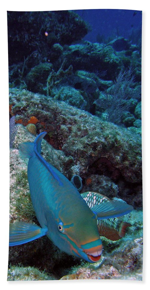 Nature Bath Sheet featuring the photograph Perky Parrotfish by Kimberly Mohlenhoff