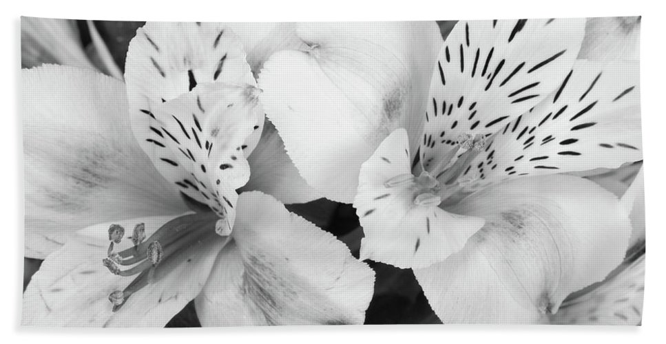 Peruvian Lilies Hand Towel featuring the photograph Peruvian Lilies Flowers Black And White Print by James BO Insogna