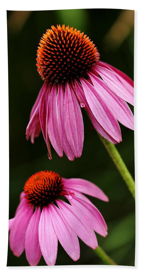 Echinacea Hand Towel featuring the photograph Petals And Quills by Debbie Oppermann
