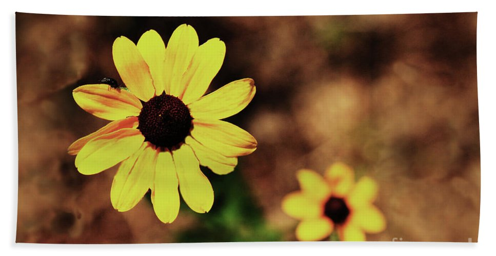 Sunflower Bath Towel featuring the photograph Petals Stretched by Kim Henderson