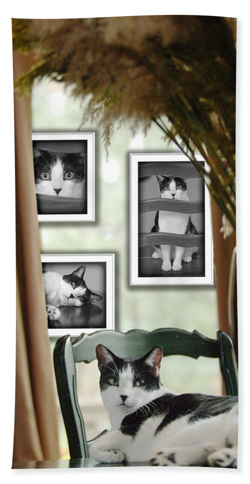Pet Hand Towel featuring the photograph Phat Cat by Jill Reger