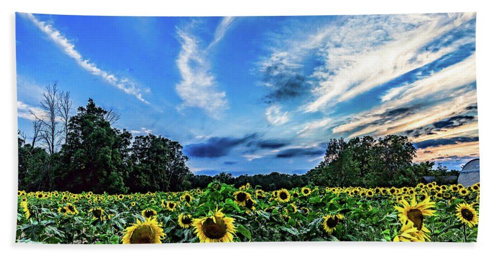 Sunflowers Hand Towel featuring the photograph Photobomb by Joe Holley