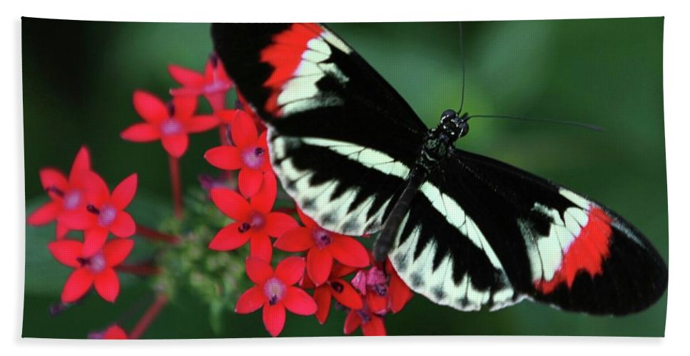 Butterfly Hand Towel featuring the photograph Piano Key Butterfly by Sabrina L Ryan