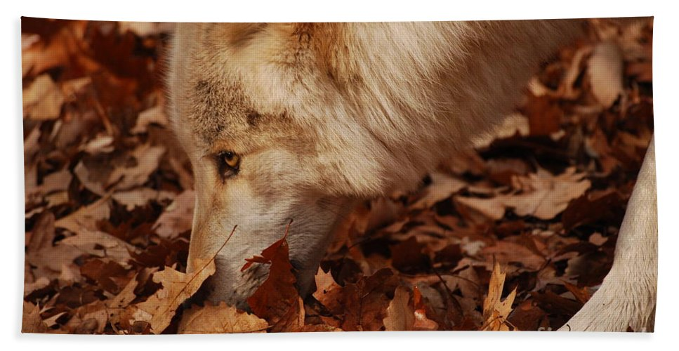 Wolf Hand Towel featuring the photograph Picking Up The Scent by Lori Tambakis