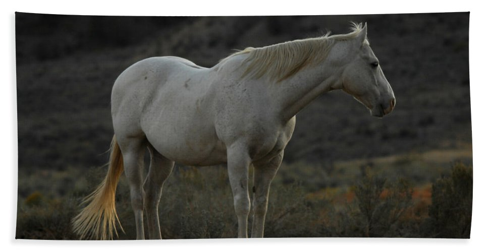 Horse Hand Towel featuring the photograph Pierre by Donna Blackhall