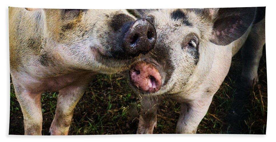 Pig Bath Sheet featuring the photograph Piggy Love by LuAnn Griffin
