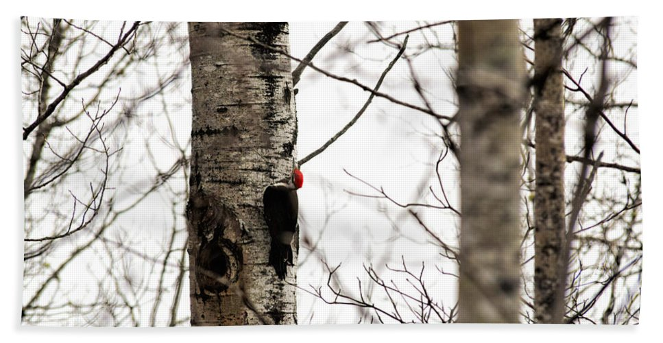 Pileated Woodpecker Bath Sheet featuring the photograph Pileated by William Tasker