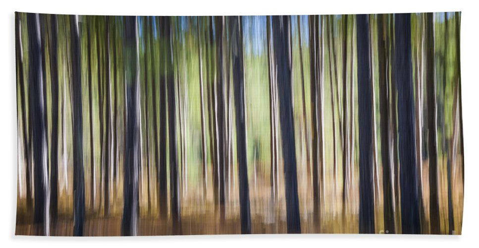 Abstract Bath Towel featuring the photograph Pine Forest by Elena Elisseeva