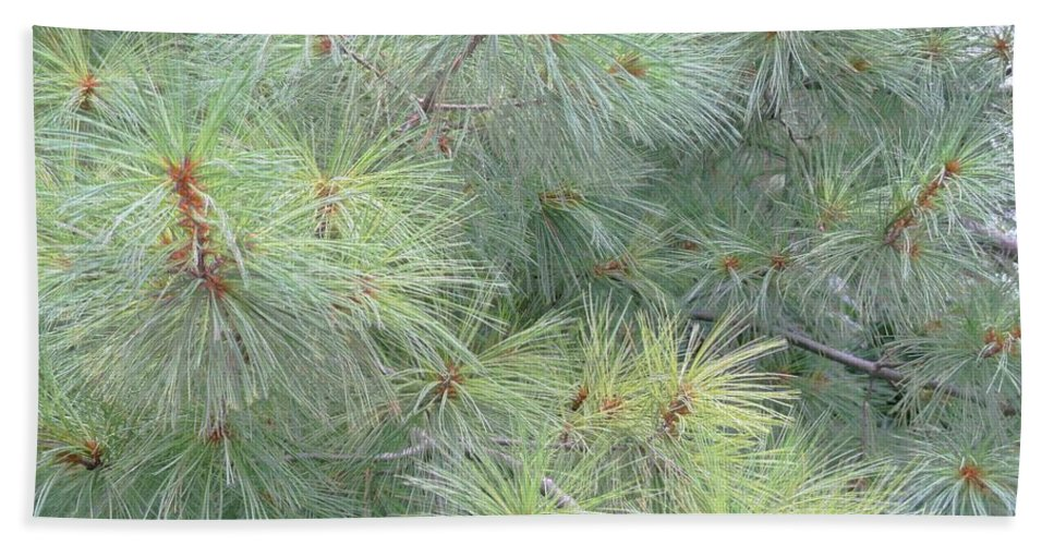 Pines Bath Sheet featuring the photograph Pines by Rhonda Barrett