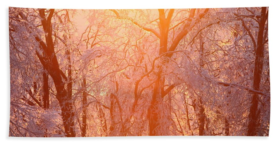 Pink Hand Towel featuring the photograph Pink and Gold by Nadine Rippelmeyer