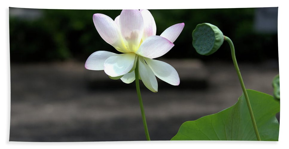 Roy Williams Hand Towel featuring the photograph Pink And White Water Lily With Green Pod by Roy Williams