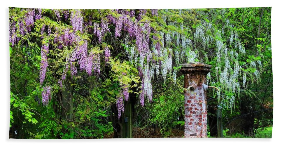 Pink And White Wisterias Hand Towel featuring the photograph Pink And White Wisterias by Kathryn Meyer
