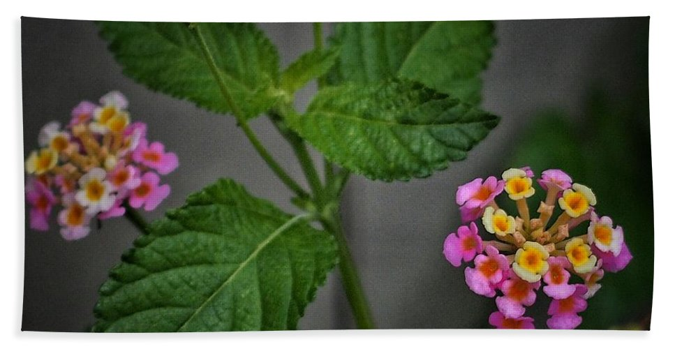 Pink Hand Towel featuring the photograph Pink And Yellow Flowers by Buck Buchanan
