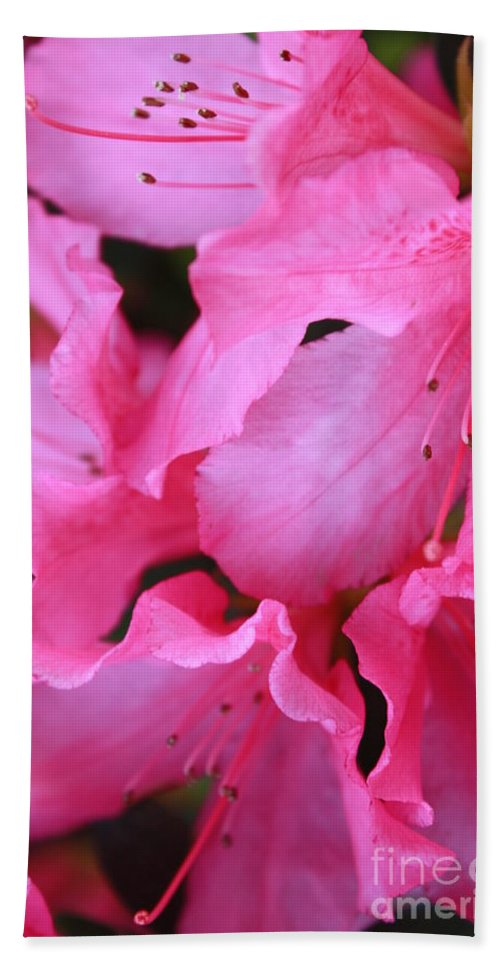 Pink Azaleas Hand Towel featuring the photograph Pink Azalea Drama by Carol Groenen