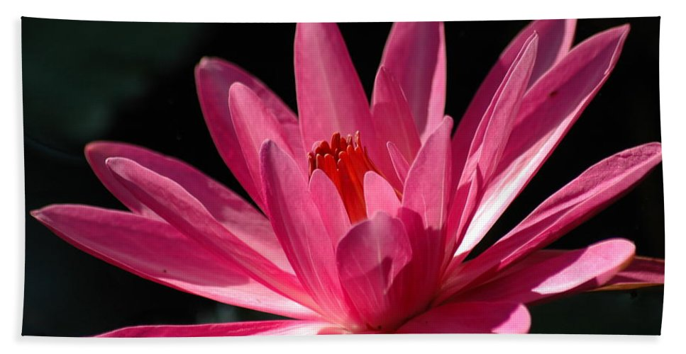 Water Lily Bath Sheet featuring the photograph Pink Beauty by Carolyn Marshall
