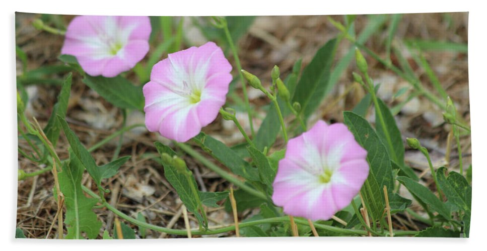 Pink Bath Sheet featuring the photograph Pink Bindweed by Ann E Robson
