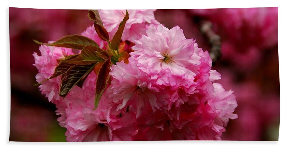 Cherry Blossom Trees Bath Sheet featuring the photograph Pink Blooms by Angie Tirado