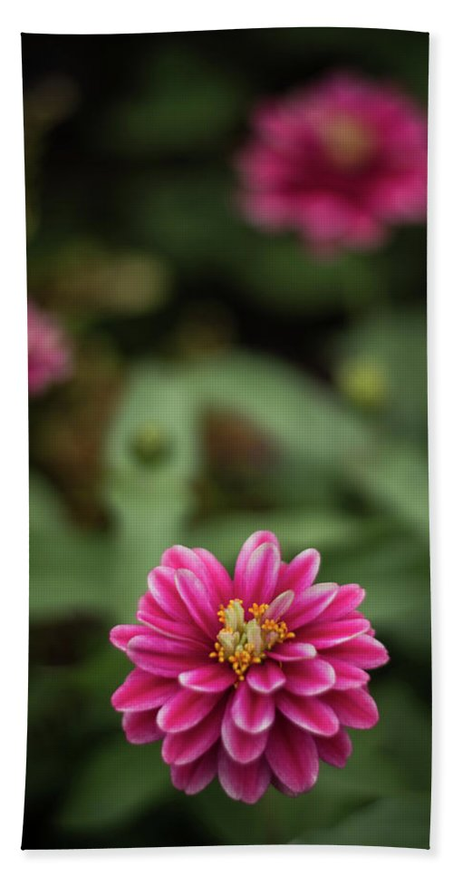 Pink Bath Sheet featuring the photograph Pink Blossom by Amanda Bhakat