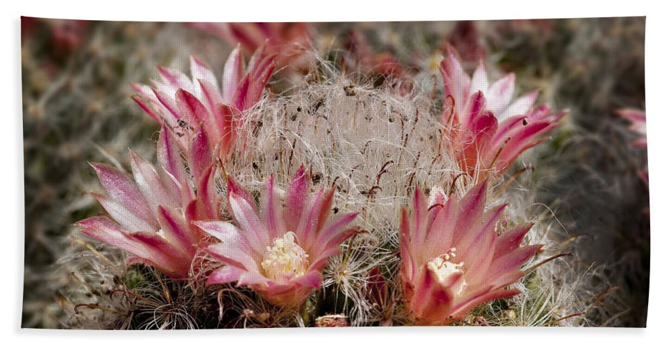 Cactus Hand Towel featuring the photograph Pink Cactus Flowers 2 by Kelley King