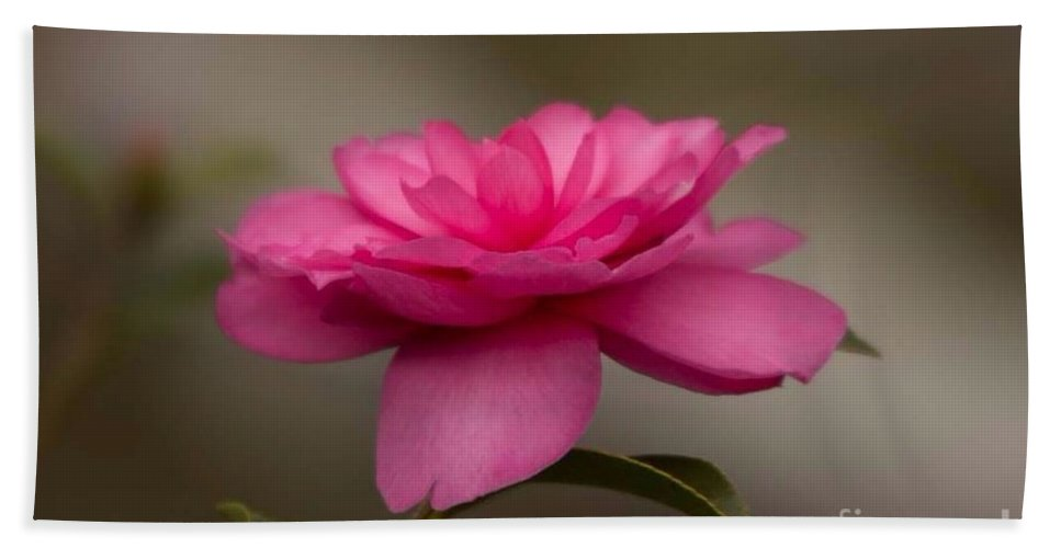 Camillea Hand Towel featuring the photograph Pink Camellia 4 by Marta Robin Gaughen