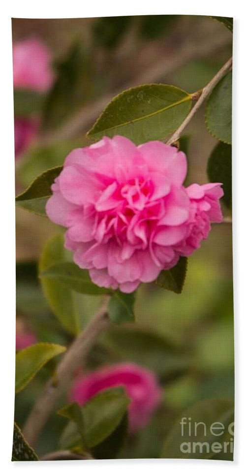 Pink Camellia Hand Towel featuring the photograph Pink Camellia 2 by Marta Robin Gaughen