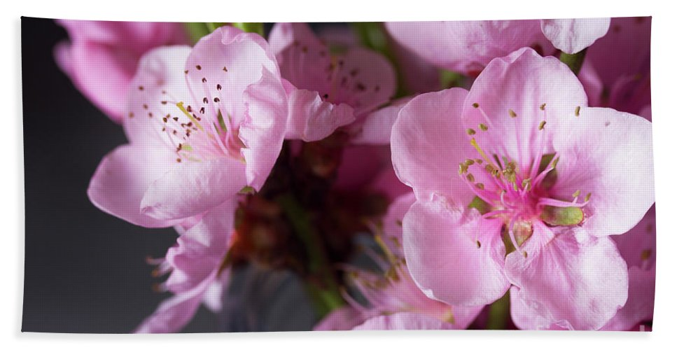 Cherry Hand Towel featuring the photograph Pink Cherry Blossom by Anastasy Yarmolovich