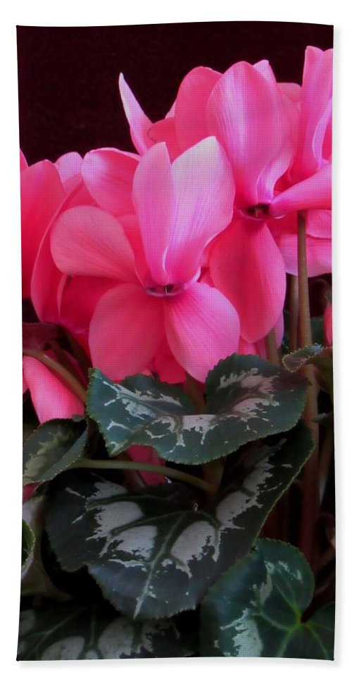Lynne Miller Hand Towel featuring the photograph Pink Cyclamen 1 by Lynne Miller