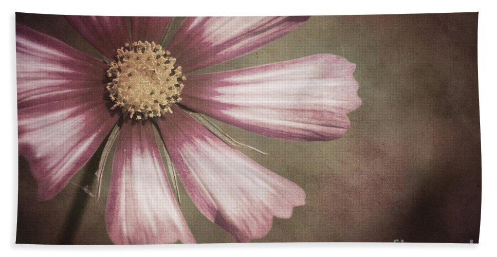 Cosmos Hand Towel featuring the photograph Pink Cosmos Painting by Jim And Emily Bush