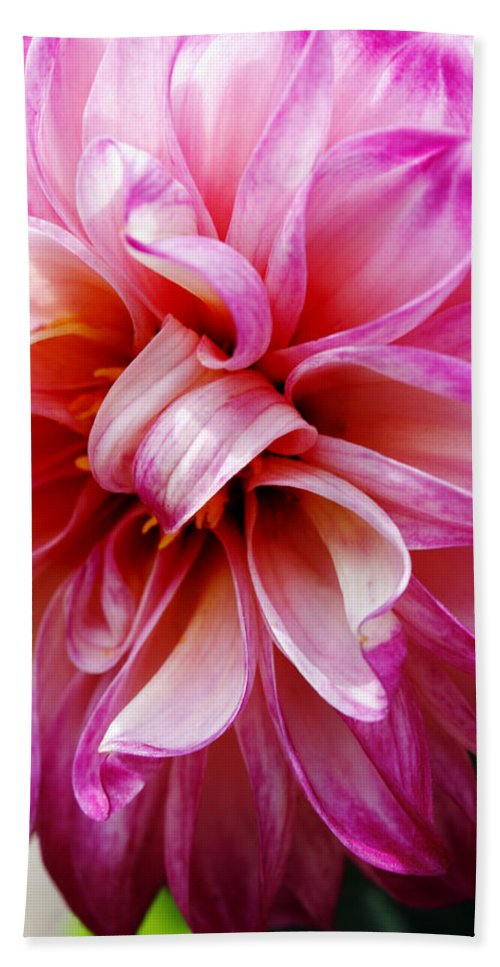 Flower Bath Sheet featuring the photograph Pink Dahlia by Marilyn Hunt
