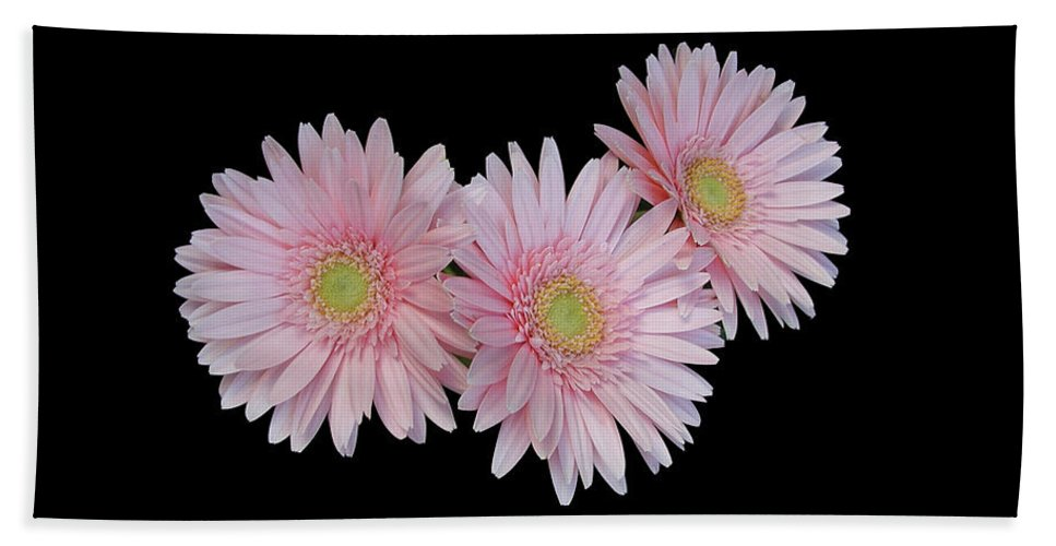 Pink Daisies Bath Sheet featuring the photograph Pink Daisies by Marvin Averett