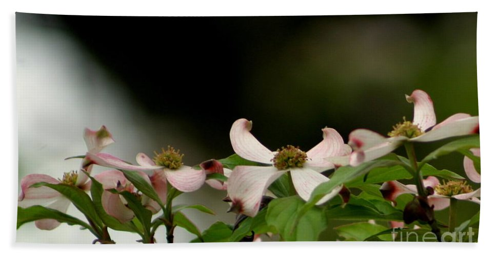 Nola Hand Towel featuring the photograph New Orleans Pink Dogwood Equinox by Michael Hoard