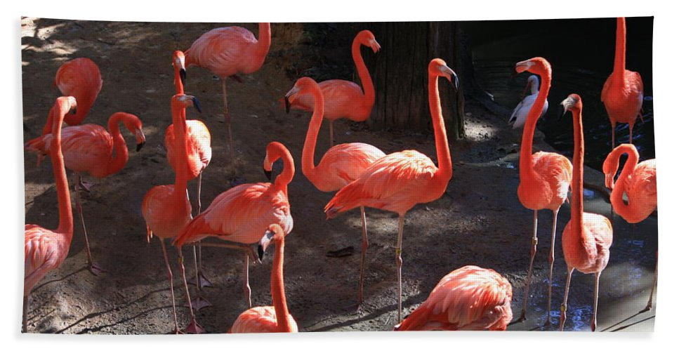Pink Flamingos Hand Towel featuring the greeting card Pink Flamingos by Carol Groenen