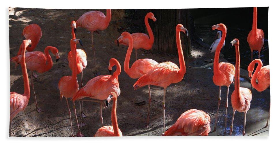 Pink Flamingos Bath Sheet featuring the greeting card Pink Flamingos by Carol Groenen