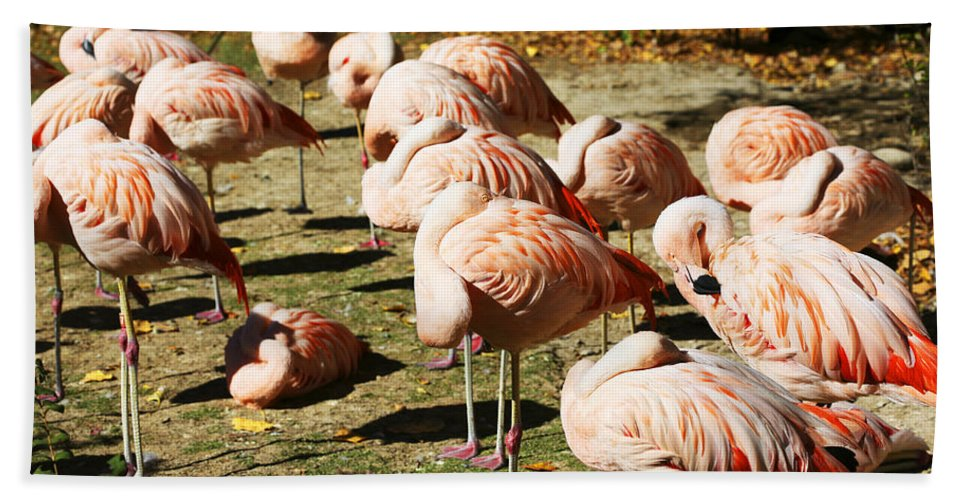 Pink Flamingos Bath Sheet featuring the photograph Pink Flamingos by Marilyn Hunt