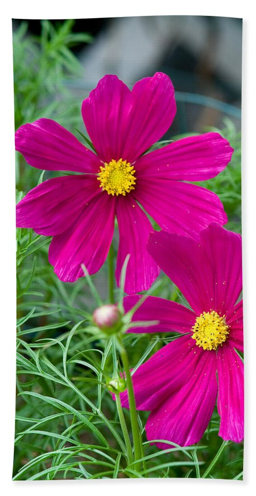 Pink Bath Towel featuring the photograph Pink Flower by Michael Bessler