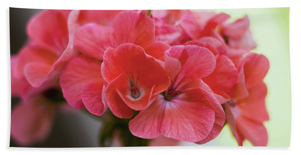 Macro Bath Sheet featuring the photograph Pink Flower by Nicola Nobile