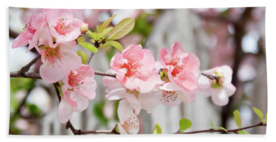 Flowers Hand Towel featuring the photograph Pink Flowers And A White Picket Fence by Toni Hopper