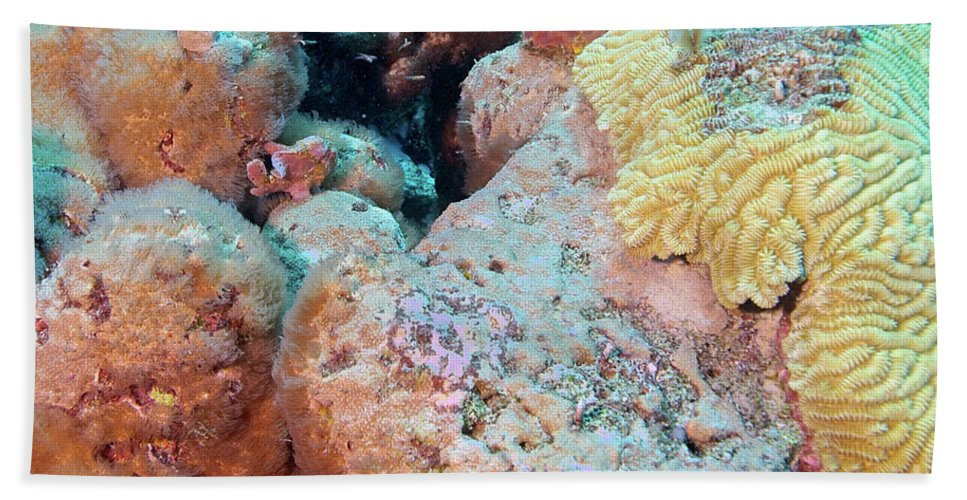 Bonaire Hand Towel featuring the photograph Pink Frogfish by Thomas Major