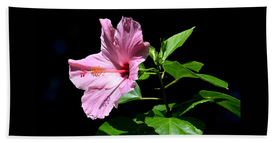 Hibiscus Bath Towel featuring the photograph Pink Hibiscus by Ingrid Zagers