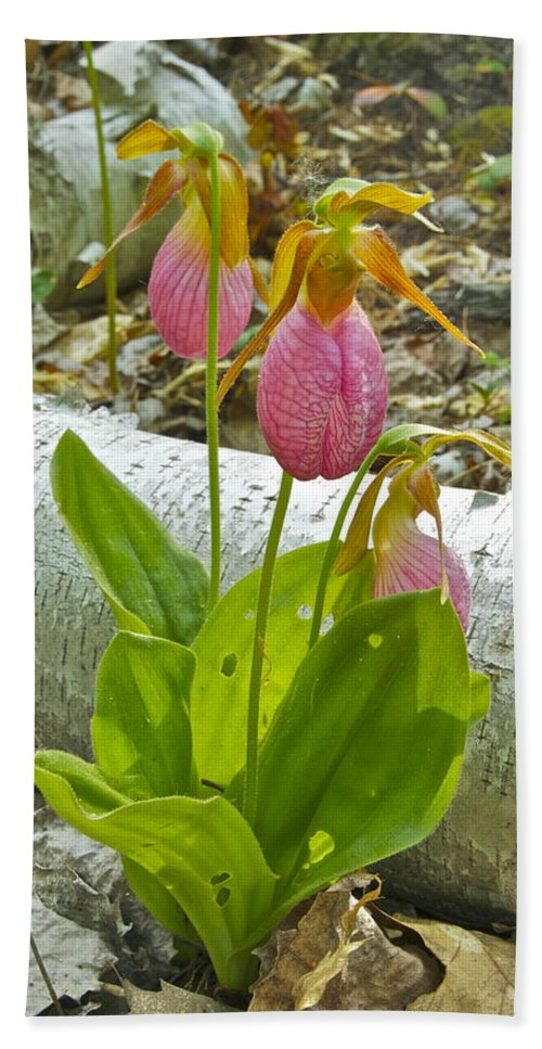 Wildflower Hand Towel featuring the photograph Pink Lady Slipper by Michael Peychich