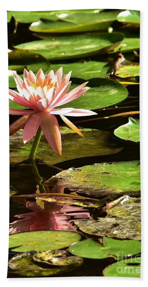 Pink Lily Reflection Bath Sheet featuring the photograph Pink Lily 14 by Lisa Renee Ludlum