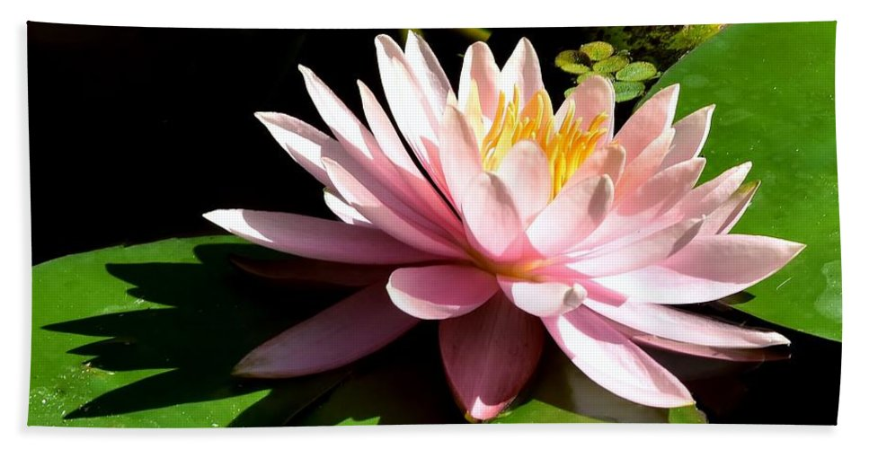 Pink Lily Reflection Bath Sheet featuring the photograph Pink Lily 9 by Lisa Renee Ludlum