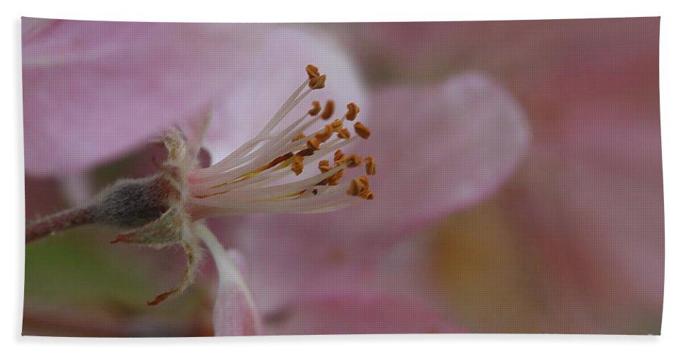 Flower Bath Sheet featuring the photograph Pink Of Spring by Deborah Benoit