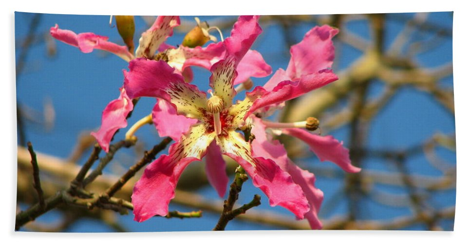 Orchid Bath Sheet featuring the photograph Pink Orchid Tree by Carla Parris