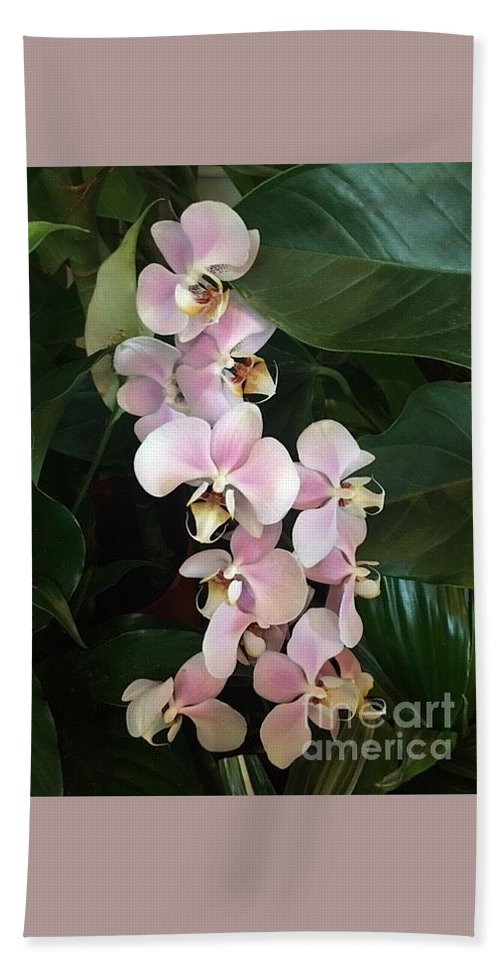 Art Bath Sheet featuring the photograph Pink Orchids by Jeannie Rhode
